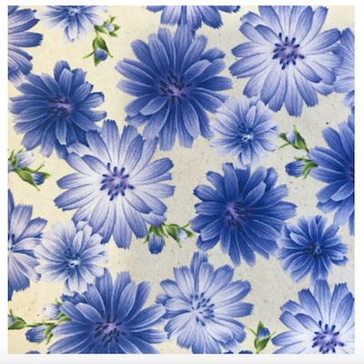 Chicory, Wildflowers of Maine Fabric