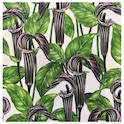 Jack In The Pulpit 120SQ80
