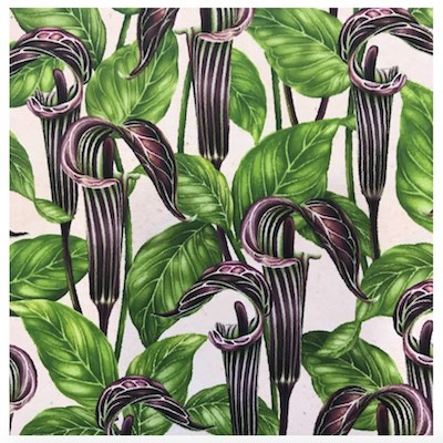 Jack In The Pulpit, Wildflowers of Maine Fabric