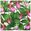 Lady Slipper 120SQ80