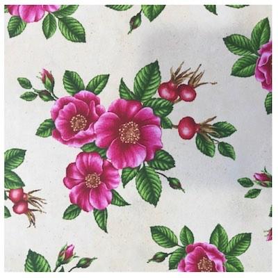 Rugosa Rose | Wildflowers of Maine