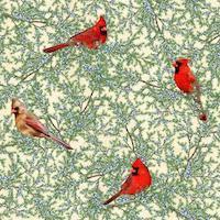 Cardinal | Juniper