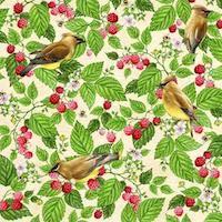 Cedar Waxwing / Raspberry