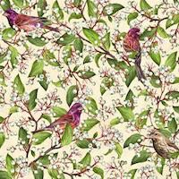 Purple Finch / Gray Dogwood